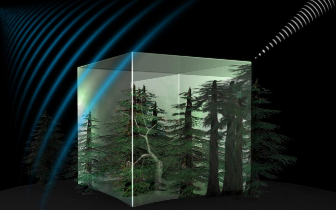 Optical Measurement Technology To Increase Forestry Effectiveness