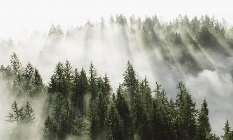 FSC se lance dans la recherche sur le carbone forestier