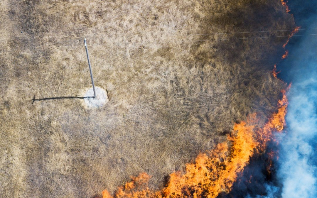 Vaccine for Wildfires